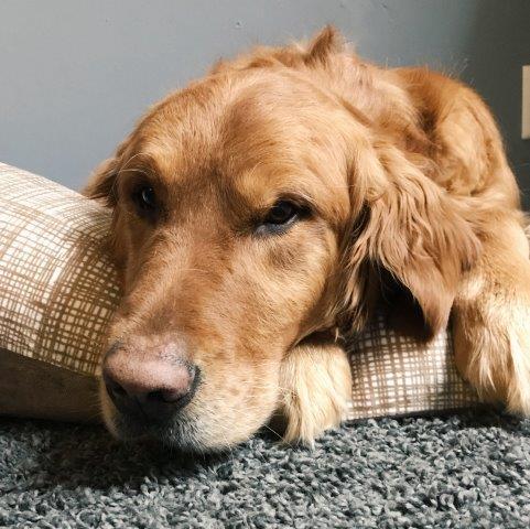 Jade Miller's dog named Bear