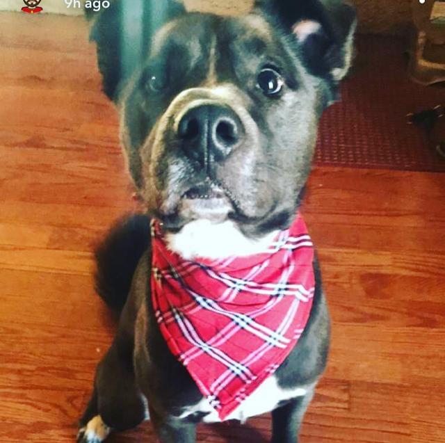 James Mahoney's cute dog named Clark