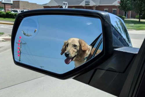Reflection of a golden retriever in the driver's side mirror of a car