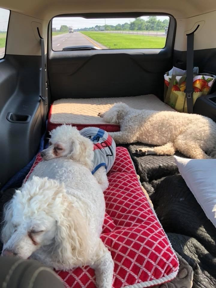 Photo of Sheri Peterson's vehicle when they're travelling with pets